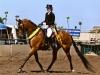 dream-dancer-reg-1-sporthorse-show-hack-championweb