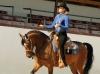 marco-na-western-pleasure-jr-horse