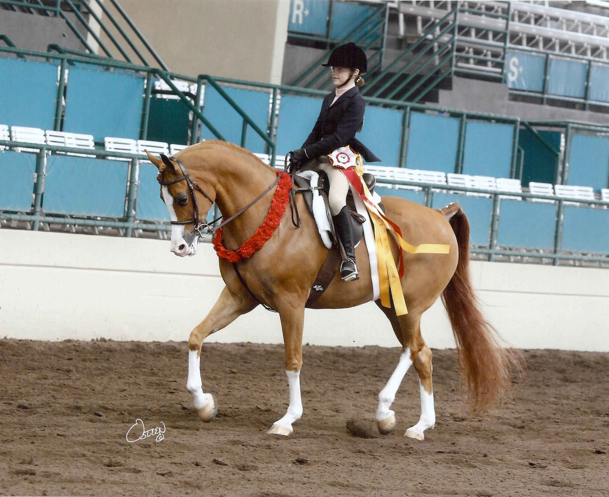 Besson Cavalier (Besson Carol X Bey Embraceable by Bey Shah)