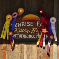 2012 AHASC Fall Show & Rancho Cal Fall Show