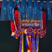 2013 Scottsdale Arabian Show Results
